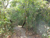 Copan-nature-walk