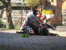 Bali-dance-mouse